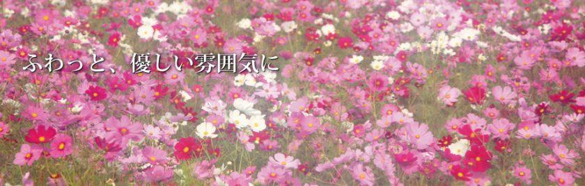 index_soft